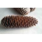 Шишка лесная (12-15 см) WS-11-002